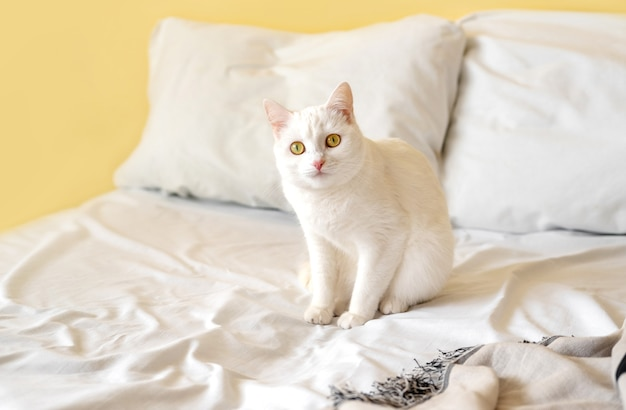 Gato de pêlo curto branco na cama