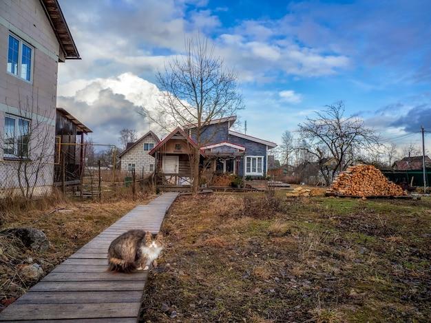 Gato de quintal e casa de fazenda com lenha no início da primavera. vista de primavera dramática da propriedade.