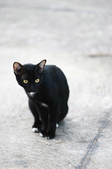 Gato de rua à procura de comida na rua