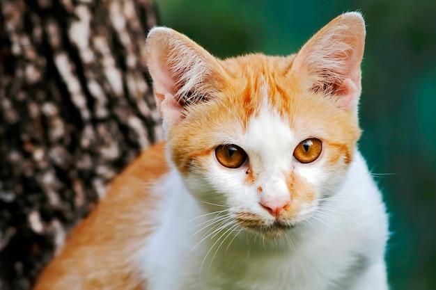 Gato de rua amarelo