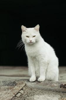 Gato de rua branco com olhos verdes em preto