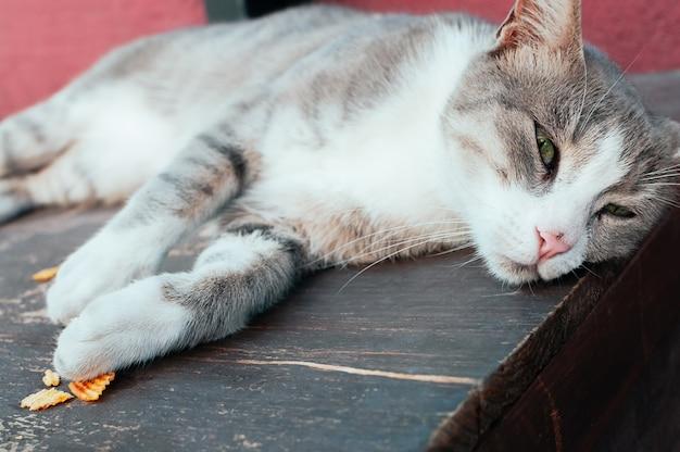 Gato de rua cinzento bonito