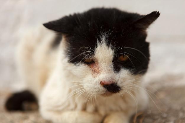 Gato de rua com um olho ferido