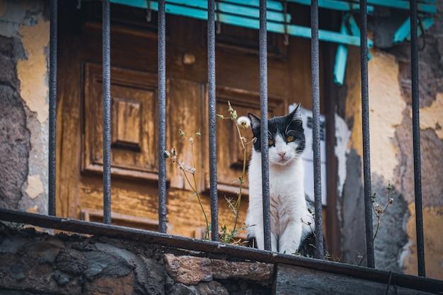 Gato de rua em uma varanda velha