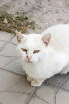 Gato de rua ferido branco sem teto sentado e olhando para a câmera. gato abandonado e ferido na rua. foco seletivo no gato com fundo desfocado.