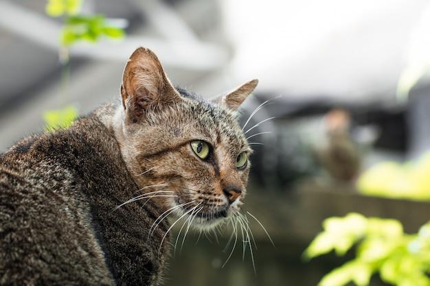 Gato de rua isolar no fundo