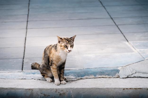 Gato de rua no urbano. gato listrado marrom. pavimento de cimento