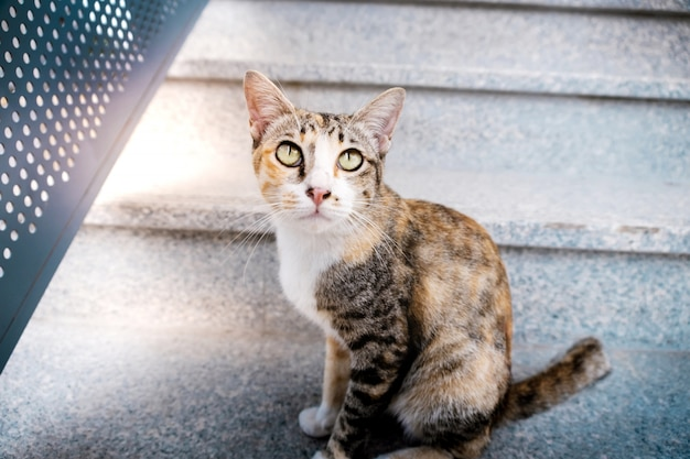 Gato de rua no urbano. gato listrado marrom