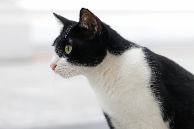 Gato de rua preto e branco olhando para algo