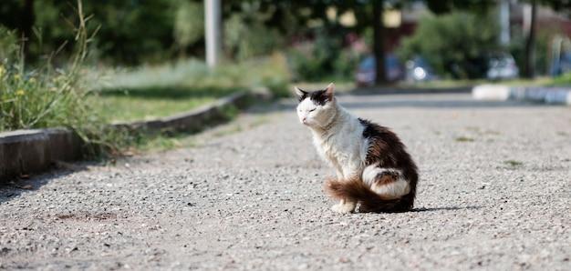Gato de rua selvagem