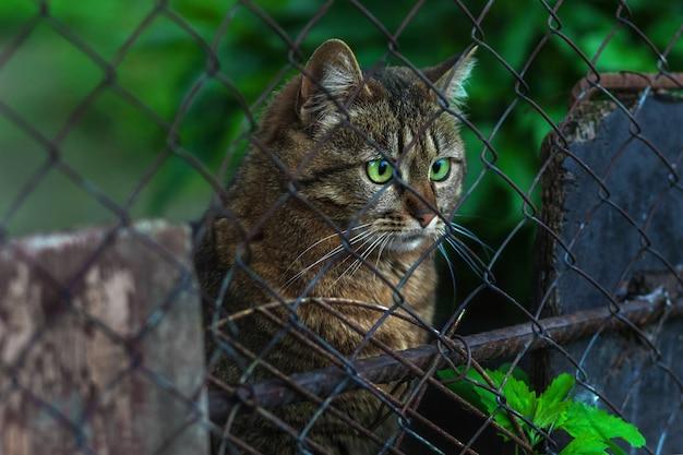 Gato de rua sem-teto senta-se atrás de uma cerca e olha com olhos verdes brilhantes. foco seletivo
