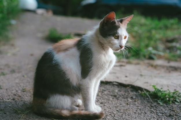 Gato de rua senta-se no chão.