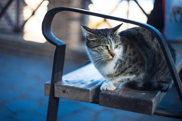 Gato de rua sentado ao ar livre em um banco do parque