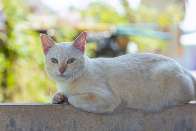 Gato deitado do lado de fora