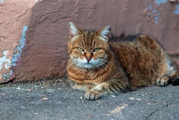 Gato deitado junto ao muro na calçada de asfalto na rua