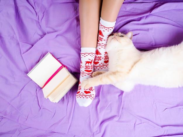 Gato deitado no sofá na sala de estar decorada para o natal, pernas femininas em meias de natal.