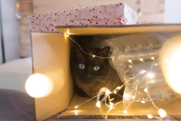 Gato dentro de uma caixa de presente de natal com luzes