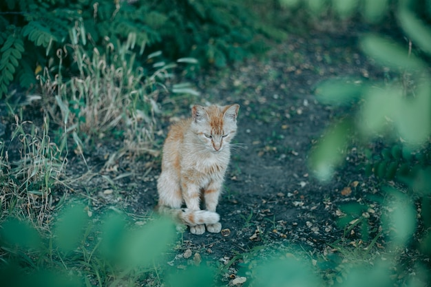 Gato desabrigado abandonado faminto e bem cuidado