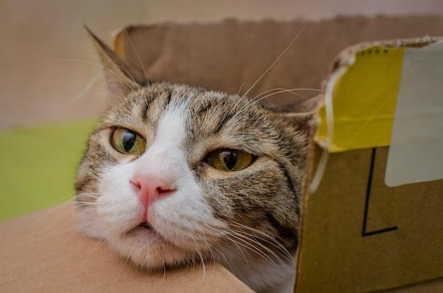 Gato descansando em uma caixa com a cabeça para fora