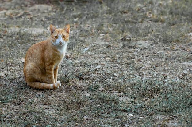 Gato desfrutando ao ar livre