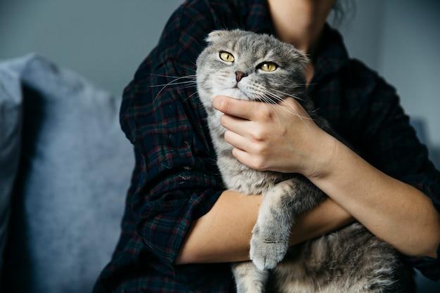 Gato, desfrutando, carícia, de, hostess