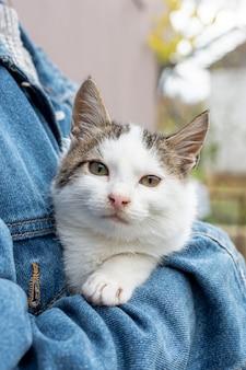 Gato doméstico bonito de alto ângulo, sentado nos braços do proprietário
