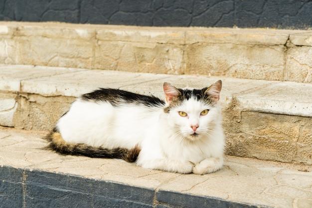 Gato doméstico curioso está deitado na escada da casa
