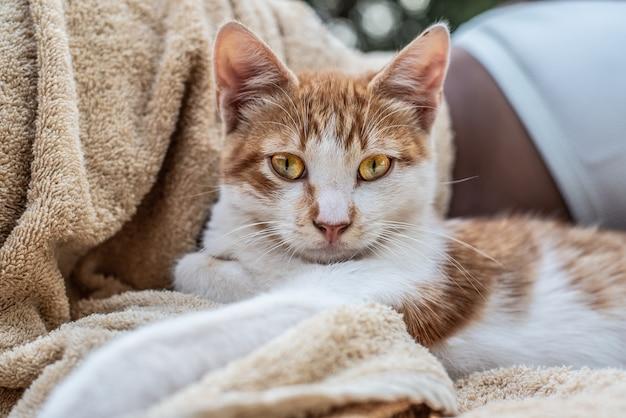 Gato doméstico de estimação bonito retrato