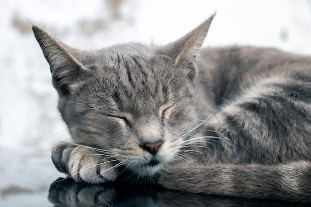 Gato doméstico em cima do carro