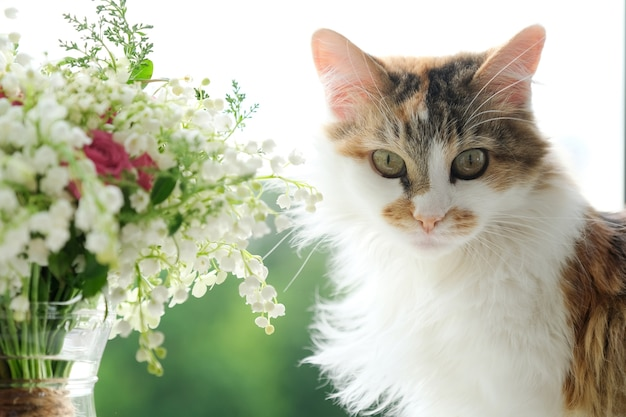 Gato doméstico fofo e buquê de flores da primavera lírios do vale em um vaso na janela