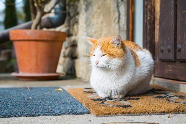 Gato doméstico fofo sentado em frente a uma porta durante o dia