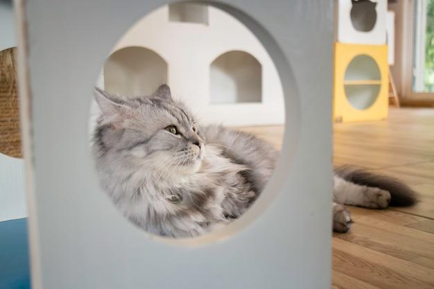Gato doméstico refrigerado na cafeteria