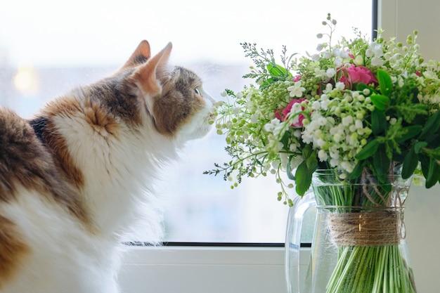 Gato doméstico tricolor adulto sentado no peitoril da janela com buquê de flores da primavera