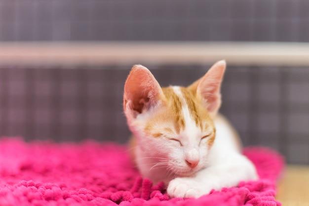 Gato dorme no tapete
