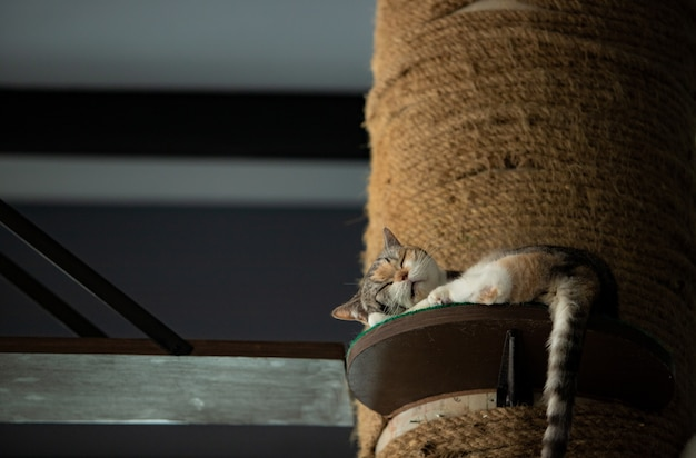 Gato dormindo em um post