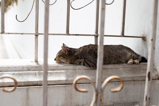 Gato dormindo na parede de cimento.