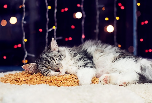 Gato dormindo no tapete, na sala de estar decorada para o natal e o ano novo