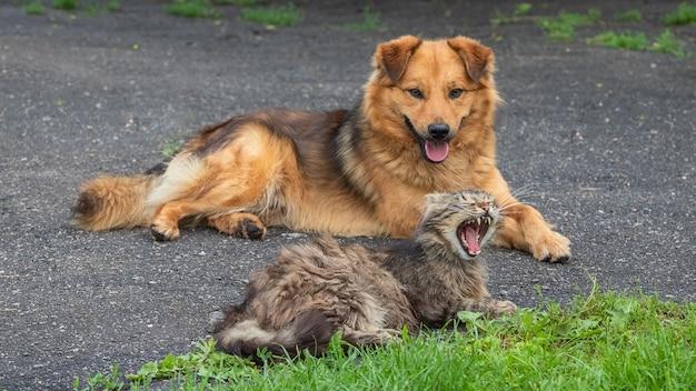 Gato e cachorro deitados pacificamente no jardim
