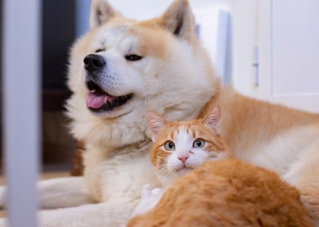 Gato e cachorro juntos no chão interior