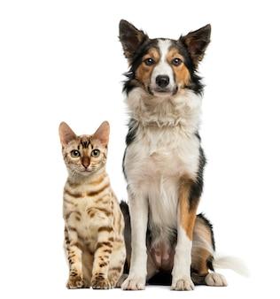 Gato e cachorro sentados juntos