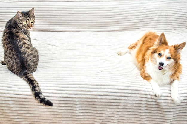 Gato e cachorro sentados lado a lado na cama