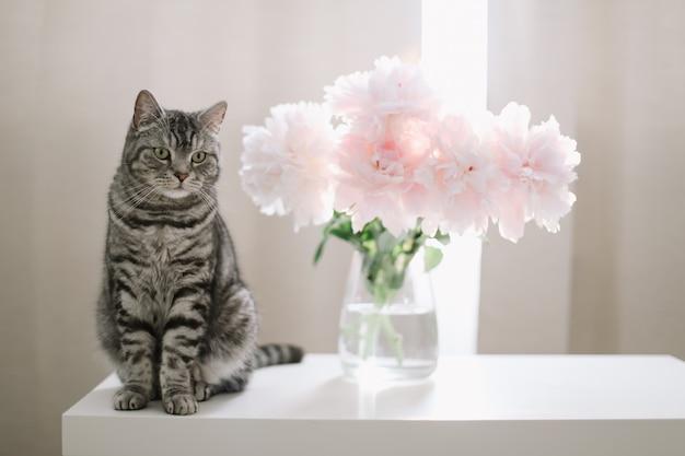 Gato e flores em uma sala ensolarada