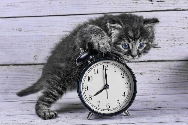 Gato e relógio na mesa de madeira, vista superior