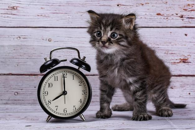 Gato e relógio na placa de madeira