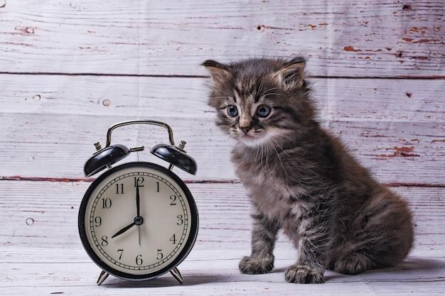 Gato e relógio