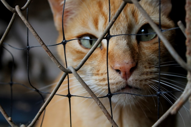 Gato em abrigo de animais