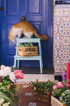 Gato em jardim decorativo