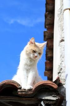 Gato em um telhado