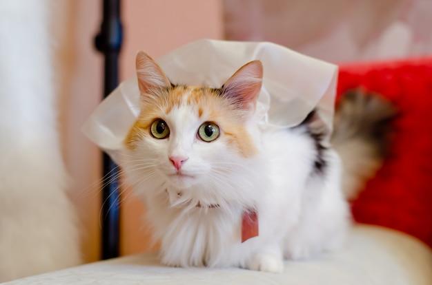 Gato em um véu de noiva