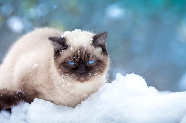 Gato encolhido de medo na neve, sentado no monte de neve